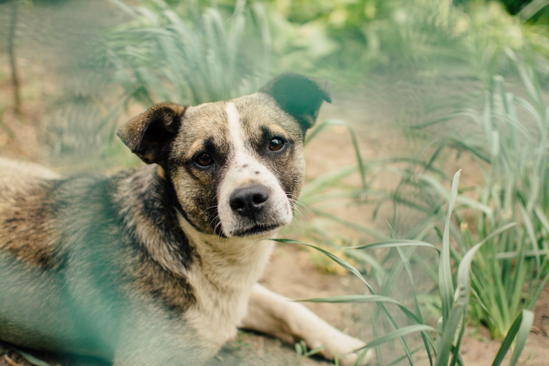 Animal Cruelty Laws by State   Animal Abuse Felony
